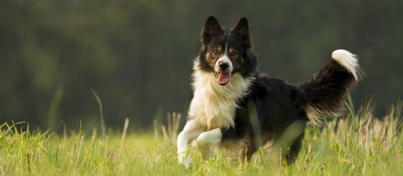 dog-3104807_1920