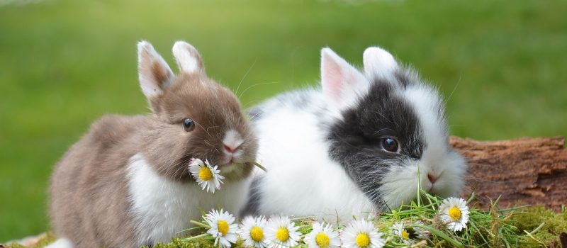 rabbit-2174679_1920